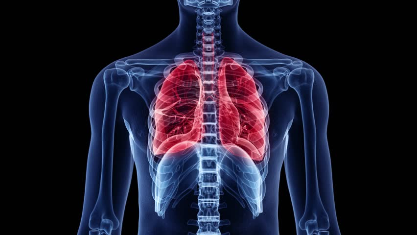 3d animation of a breathing man - visible lung Royalty-Free Stock Footage #1022858371