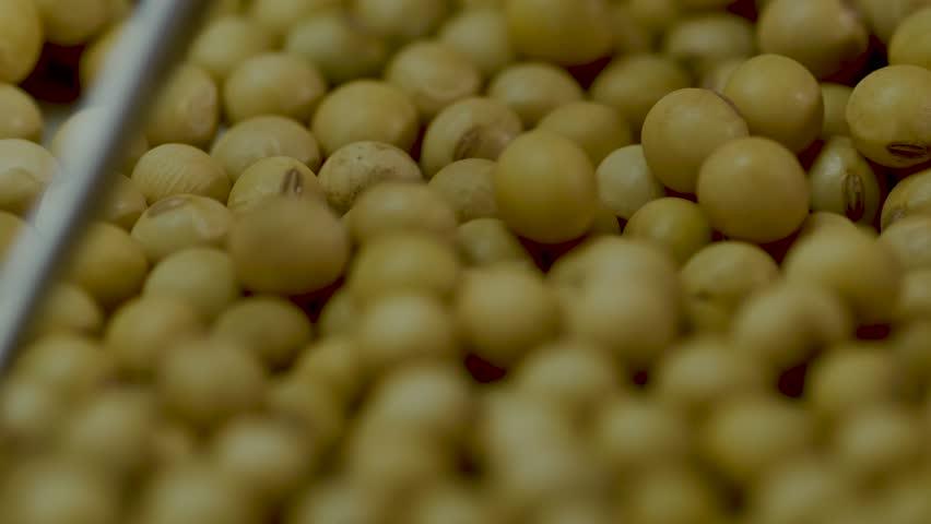 Soybean soy analyze choose | Shutterstock HD Video #1022941828