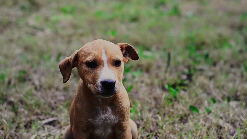Cute Mixed Breed Puppy Stock Footage