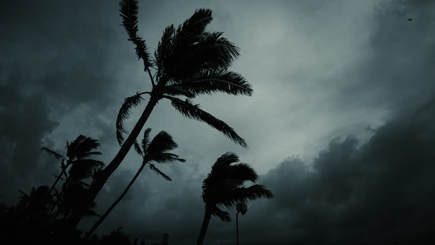 Dark Tropical Evening Stormy Sihouette Palm Trees and Clouds | Shutterstock HD Video #1023008347