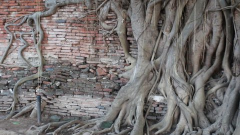 Head of sand Buddha statue in the tree roots at Wat Mahathat, Ayutthaya, Thailand.
