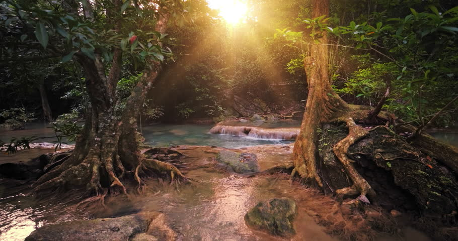 Sunlight in paradise forest. Beautiful jungle nature | Shutterstock HD Video #1023261553