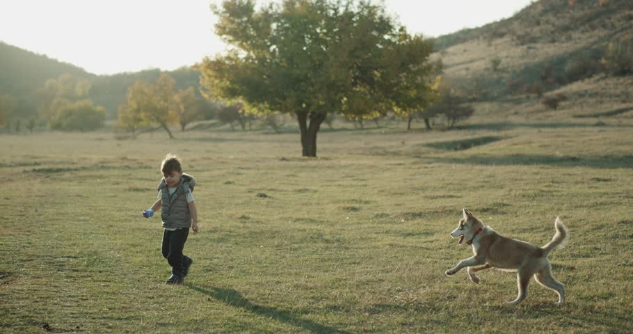 Baby husky dog playing with a cute boy three years old in the middle of field , they spending a good time together