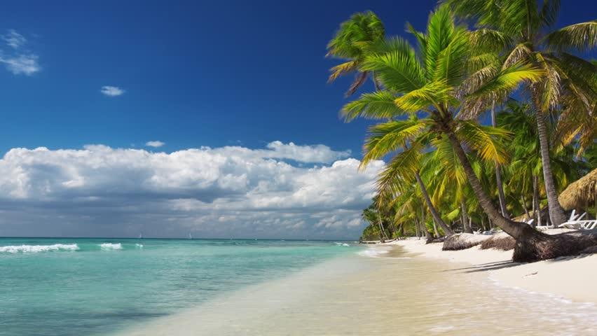 Palm trees on luxury exotic beach | Shutterstock HD Video #10233005