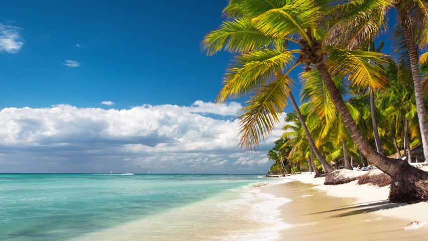 Palm trees on luxury exotic beach #10233026