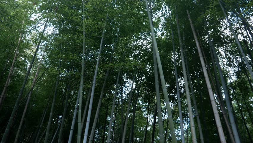 Forest Of  Green Bamboo | Shutterstock HD Video #1023336652
