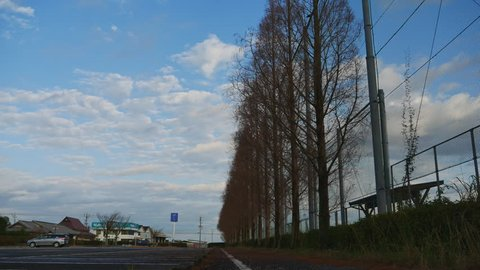 Isahaya city Nagasaki prefecture JAPAN - December 21 2018: street trees where the leaves fell are lining by the side of the street.in Japan. without sounds