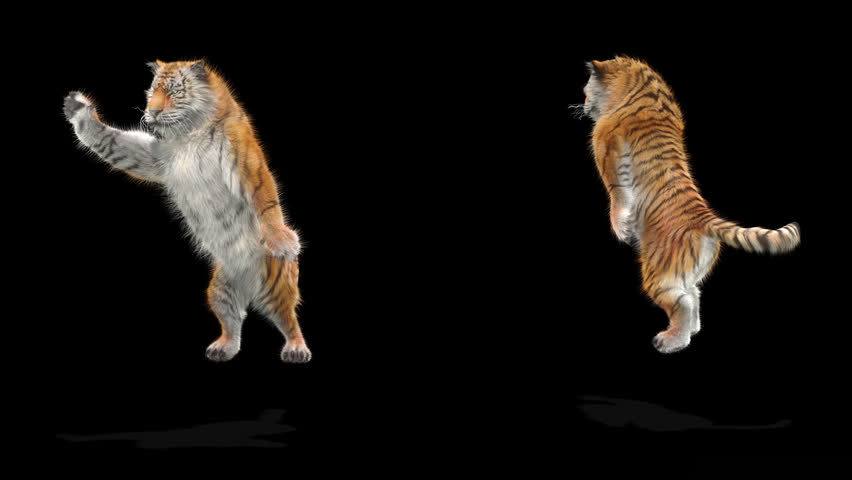Tiger CG fur 3d rendering animal realistic CGI VFX Animation  Loop alpha dance composition 3d mapping, Included in the end of the clip with Alpha matte.