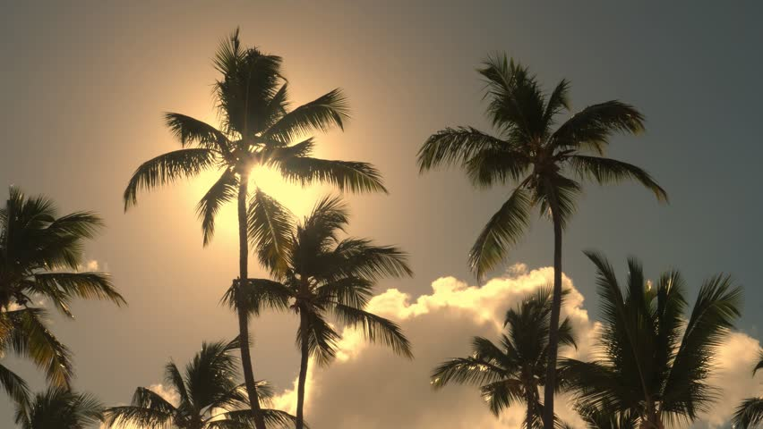 Sun beam through top of coconut palm trees , nobody | Shutterstock HD Video #1023447787