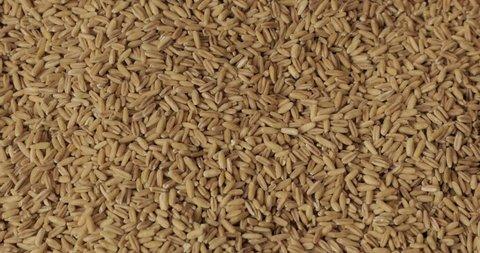 raw wheat pile
