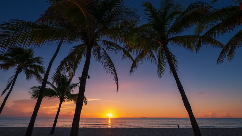 Silhouettes of palm trees on ocean beach over sunrise background. Miami, Florida. Timelapse.
