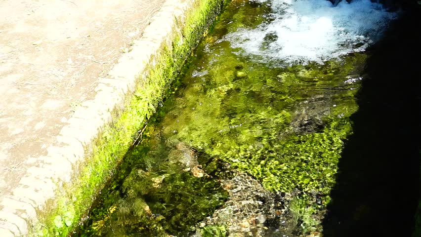 Transparent water of a mountain stream between green plants in the morning sun | Shutterstock HD Video #1023547927