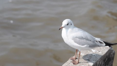 Seagull stand to rest