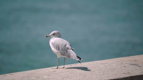 Seagull sitting in the sun on a stonewall