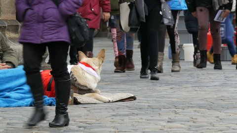 Nuremberg, Germany - December 5, 2018: A homeless beggar sits under a church with a big white dog dressed as Santa Claus and asks for alms, a crowd of people pass by