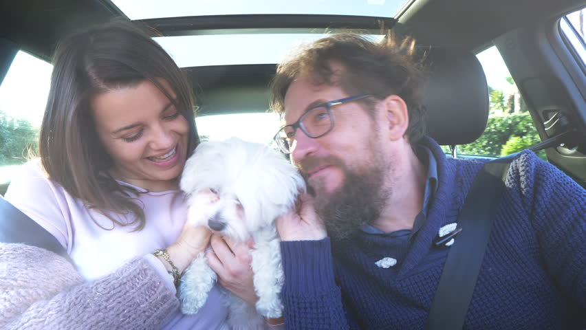 Happy couple dancing driving car with little puppy maltese dog #1024093814