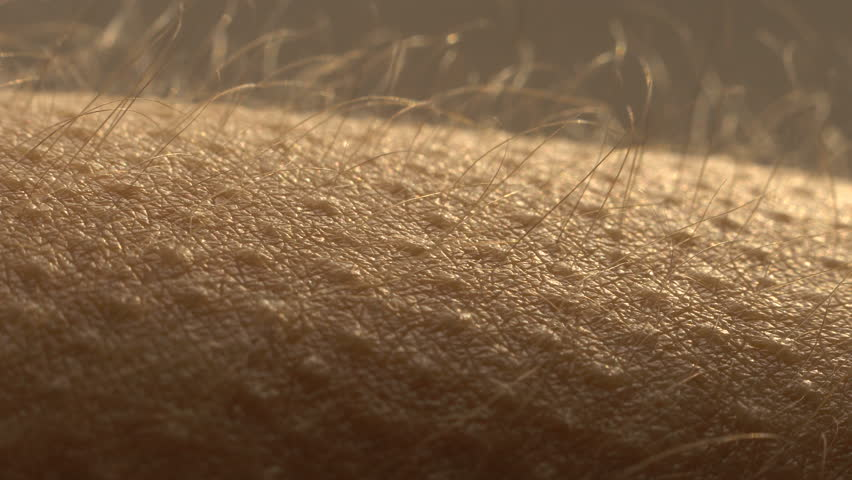 Goosebumps close up. Hair on the hand stand up and falls. Skin reaction to cold, fear, or good music. Horripilation on skin.  | Shutterstock HD Video #1024191944
