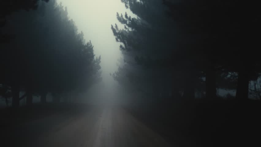 Forward moving scene through fog, dark road between forest | Shutterstock HD Video #1024291808