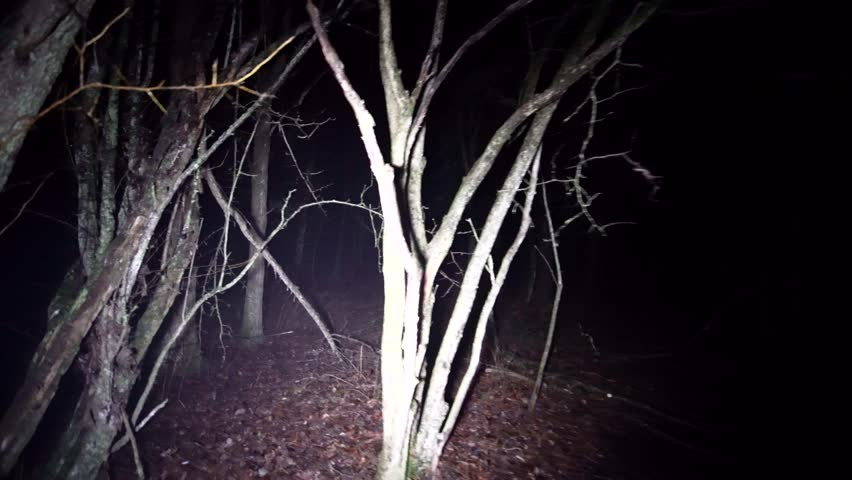 Gimbal walking through dark woods at night. Running thorough misty deep forest at night. Scared running away from monsters and death, lost and alone in the dark. Spooky trees and fog in darkness. | Shutterstock HD Video #1024545419