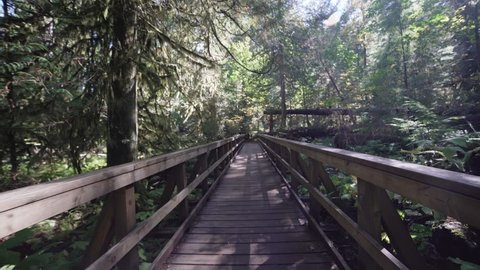 Rain Forest Walking girl