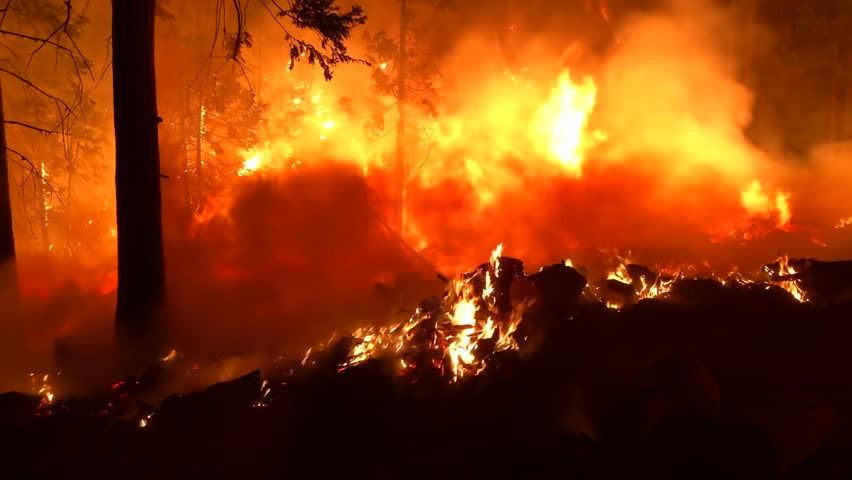 Wide Angle: Orange Flames and Smoke of a Forest Fire | Shutterstock HD Video #1024601321