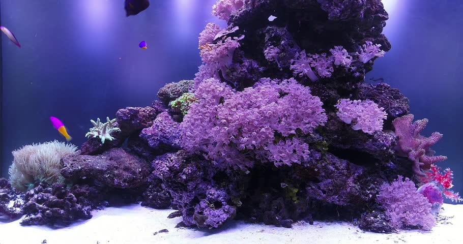 Screensaver Of A Large Reef Stock