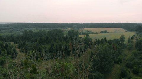 View of forest and field in Kolbudy, Kaszubia, pomorskie, Poland