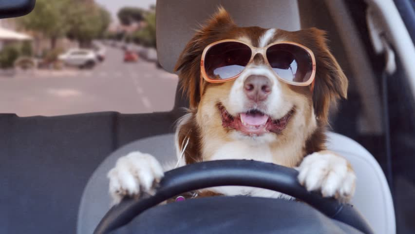 A dog driving a car on a suburban street wearing funny sunglasses