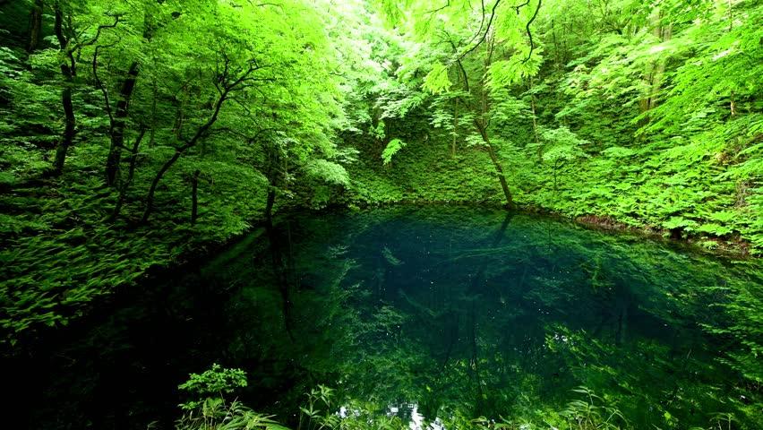 Aoike and tender greenery | Shutterstock HD Video #1024906190