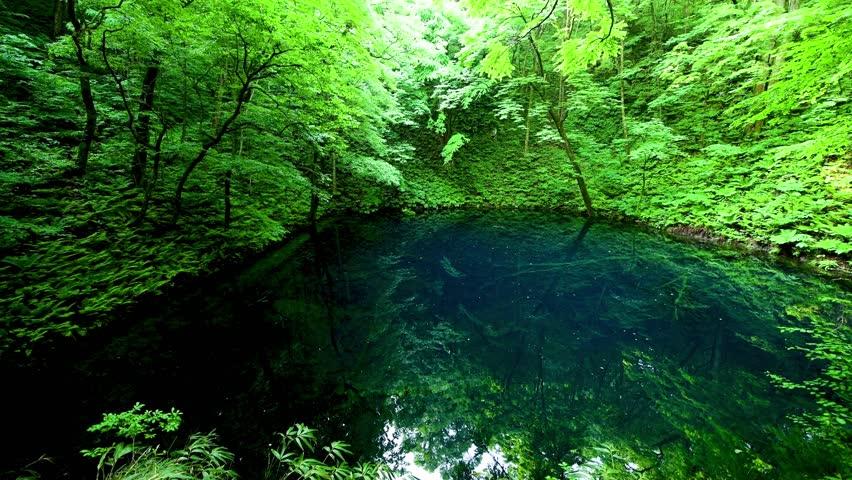 Aoike and tender greenery | Shutterstock HD Video #1024906196