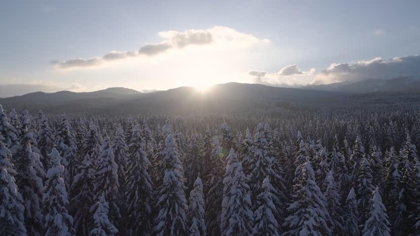 Aerial - Reveal shot of vast spruce forest landscape at sunset   Shutterstock HD Video #1024936469