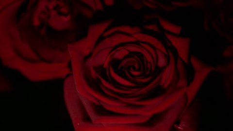 Red Rose Flower Close Up Stock Footage Video 100 Royalty Free 8719264 Shutterstock
