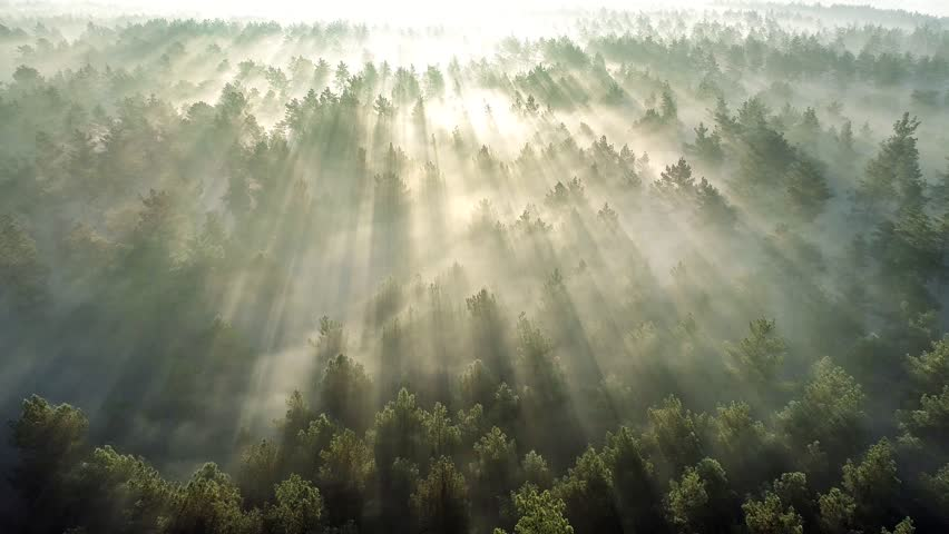 Summer forest early in the morning. Flying over misty pine forest at sunrise. High quality aerial drone shot   Shutterstock HD Video #1025007437
