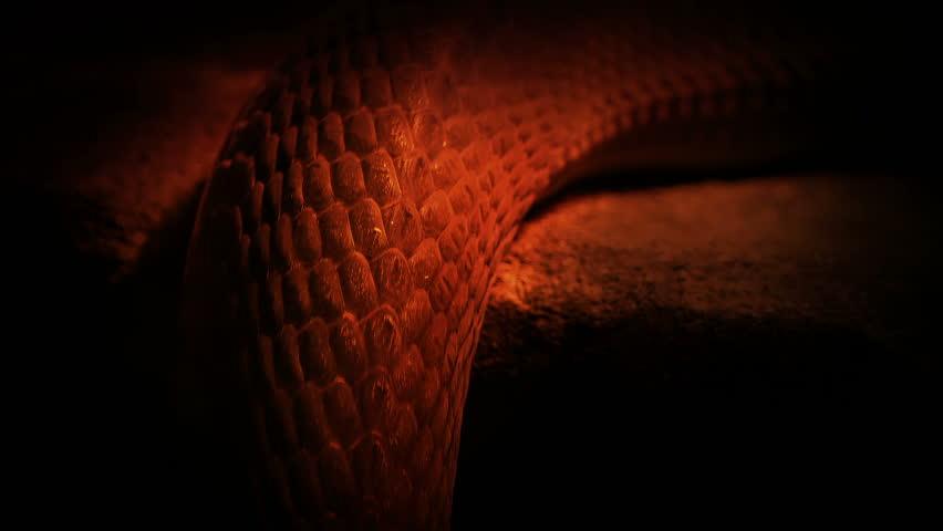 Snake Moving Over Edge In Fire Light