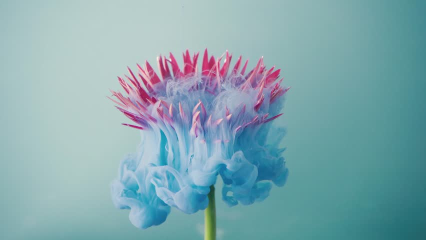 Pink daisy flower with pastel blue ink. Creative abstract nature. 4K art. | Shutterstock HD Video #1025156924