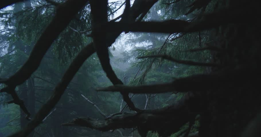 Dense spruce trees and blue spots between them in the Carpathians in slo-mo