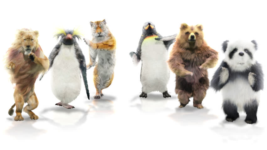 panda tiger penguin penguins White lion bear CG fur 3d rendering animal realistic CGI VFX Animation  Loop Alpha channel dance composition 3d mapping cartoon