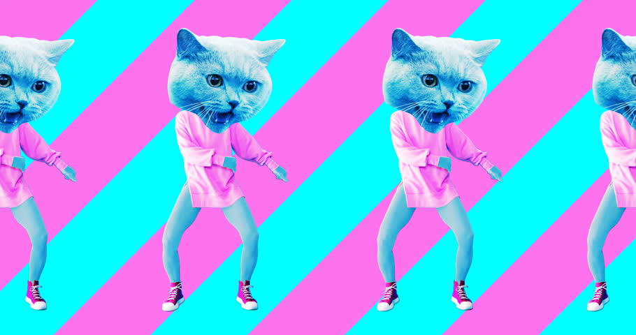 Minimal animation design. Pretty Kitty. Strip lover vibes. Pop and dance mood | Shutterstock HD Video #1025361527