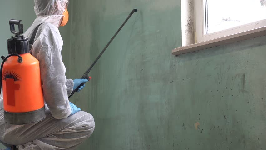 Mold Removal in San Gabriel