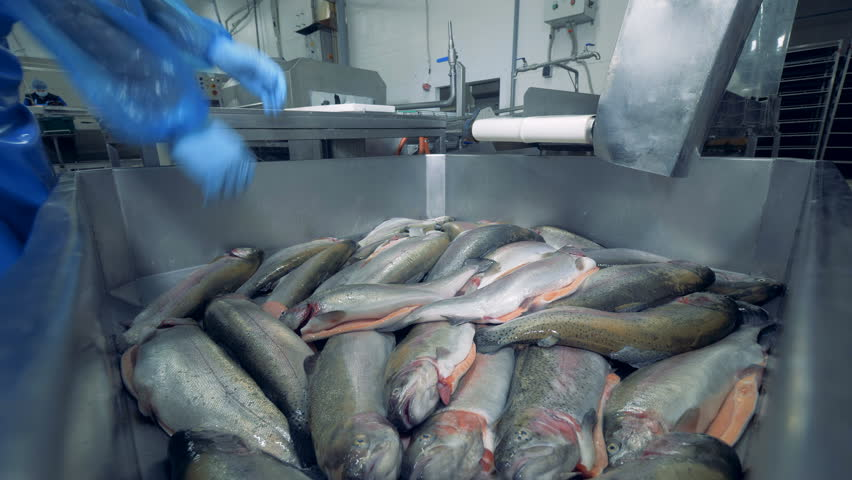 Factory worker is removing trouts from the joint pile | Shutterstock HD Video #1025390642