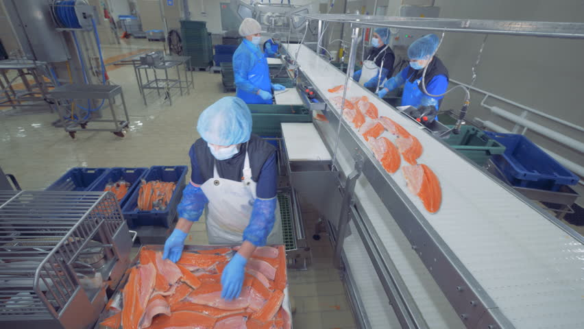 Transporting mechanism is relocating pieces of fish for processing. Fish factory. | Shutterstock HD Video #1025390768