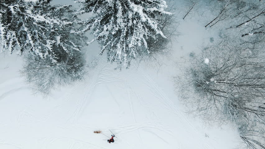 Aerial view of a man on cross-country skiing with a dog. Aerial - Cross-country skiing in nature