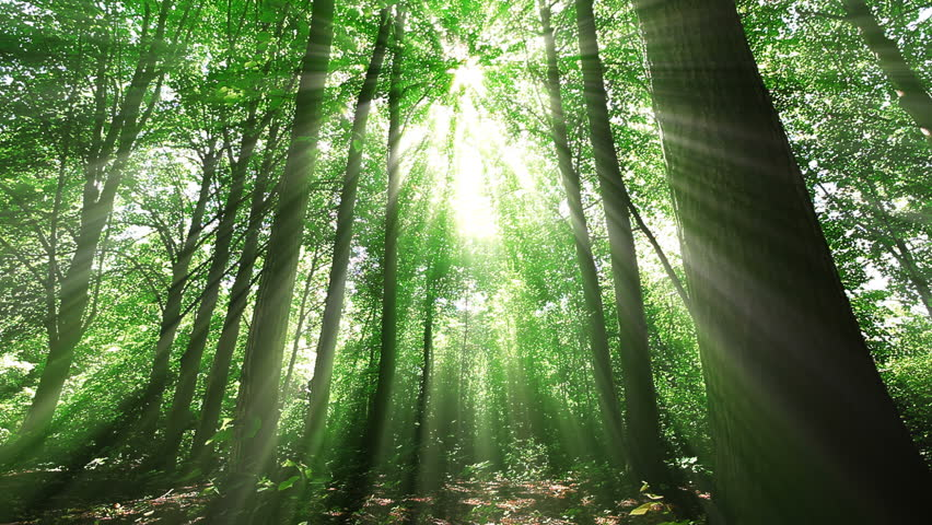 Morning in a  forest | Shutterstock HD Video #1025459375
