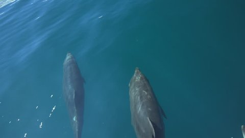 Jumping dolphins on Galapagos waters