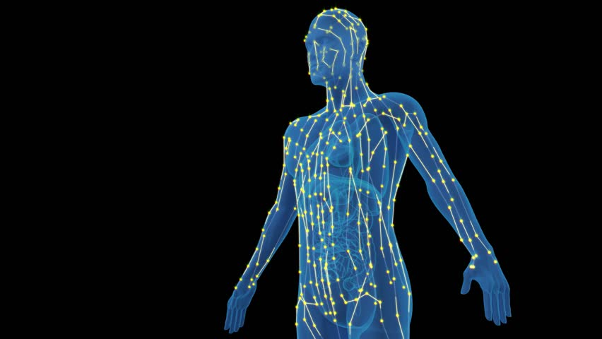 Human meridians and collaterals