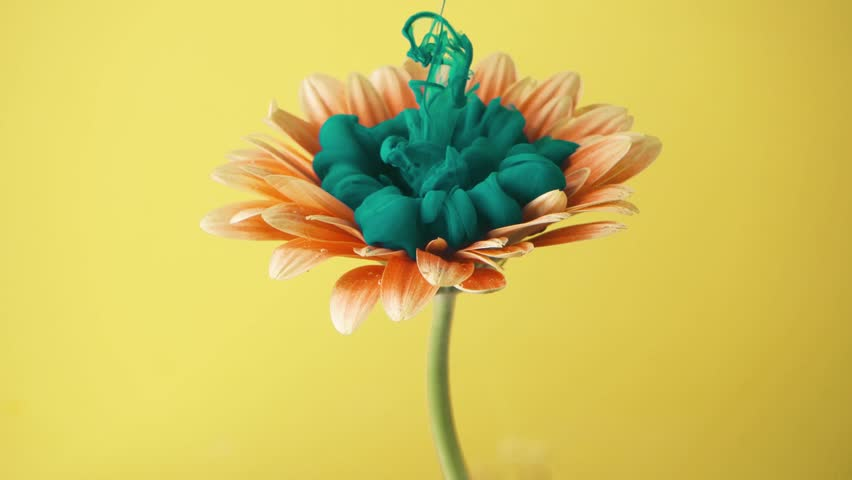 Orange daisy flower with turquoise ink. Creative abstract nature. 4K art. | Shutterstock HD Video #1025631515