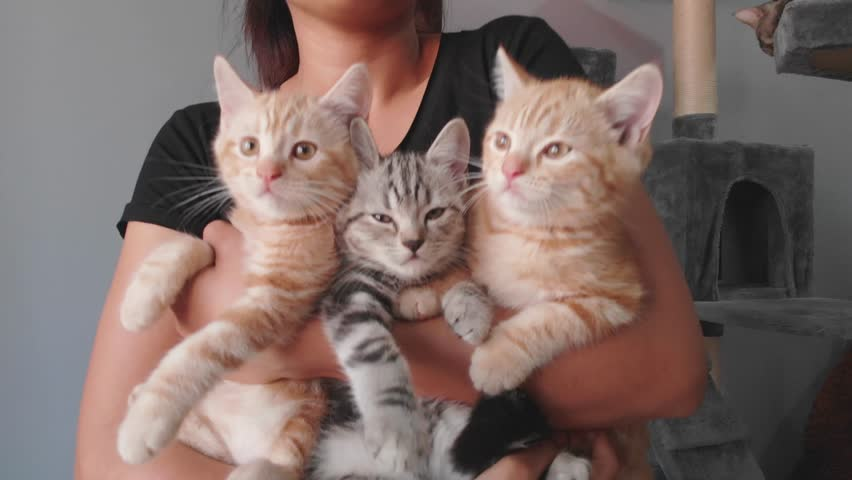 Three Kittens being held by woman. Woman Holding three Kittens. Woman holding a cat. girl with a cat in her arms. Royalty-Free Stock Footage #1025650310