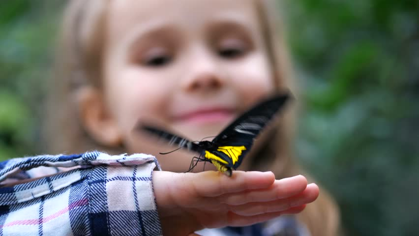 Close-up. A butterfly flutters its wings on the hand of a little girl. | Shutterstock HD Video #1025737151