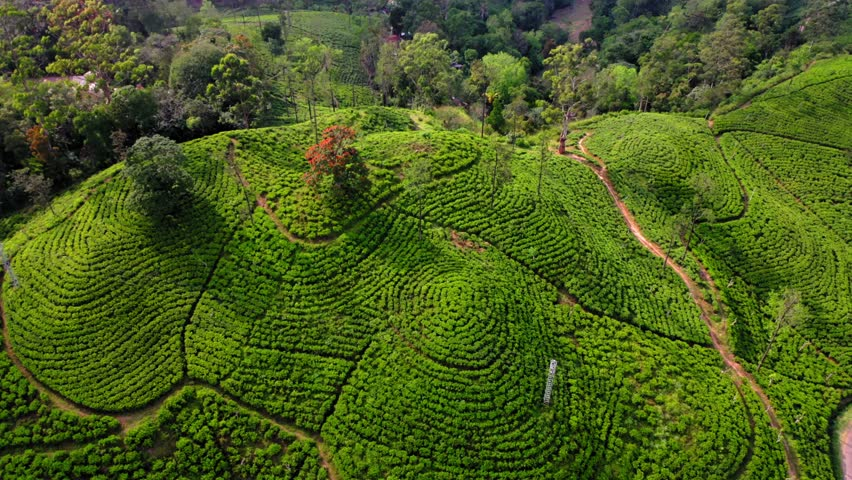 Flying on a drone over the mountains with tea plantations. Big rocks. Sunny weather. Sri Lanka