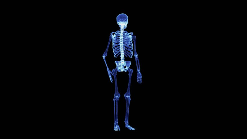 The hologram of a rotating particle skeleton. 3D animation of human skeleton on a black background with a seamless loop